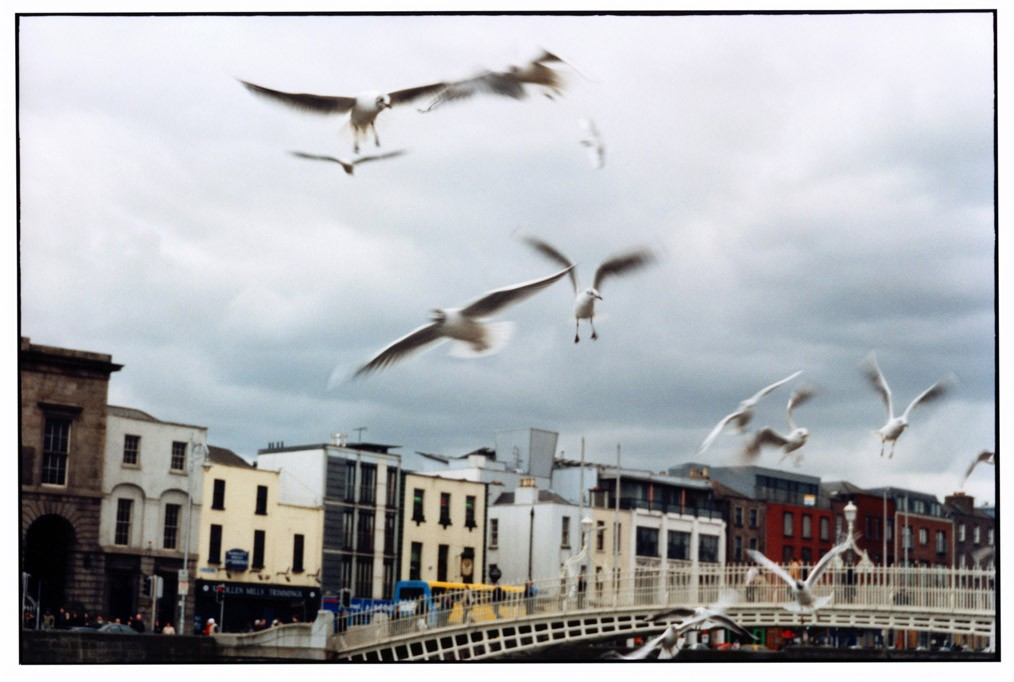 dublin_seagulls